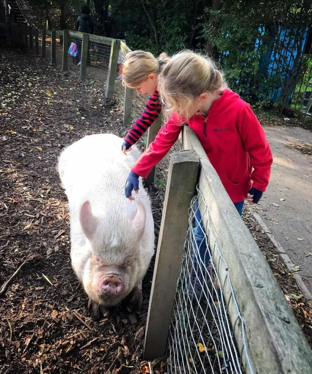 farm in london, caressing pig , the travelling twins