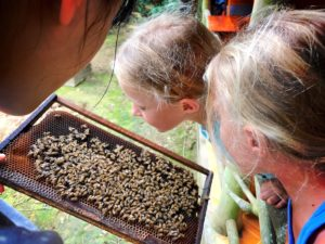 what to do with kids in Phu Quoc Island - Bee Farm - looking at the bees in Phu Quoc bee farm