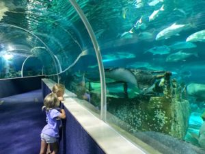 what to do with kids in Phu Quoc Island - Vinpearl land aquarium