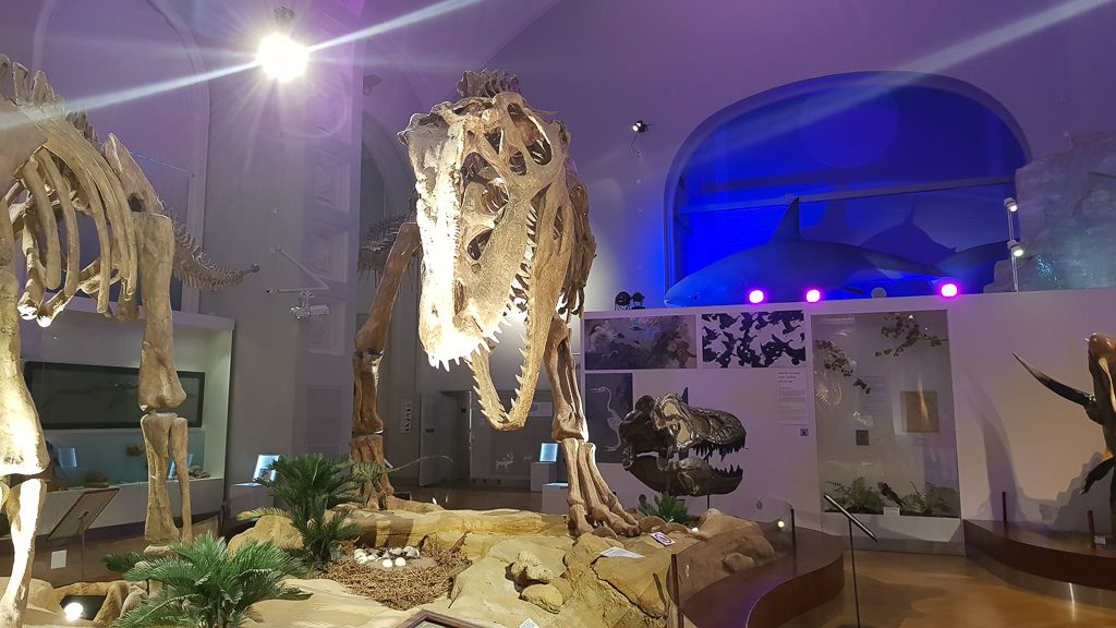 the best natural history museum in Europe - Helsinki
