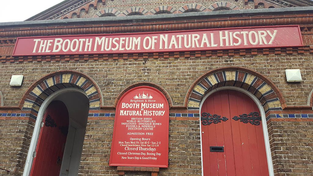 Natural history museum Brighton - the booth museum of natural history